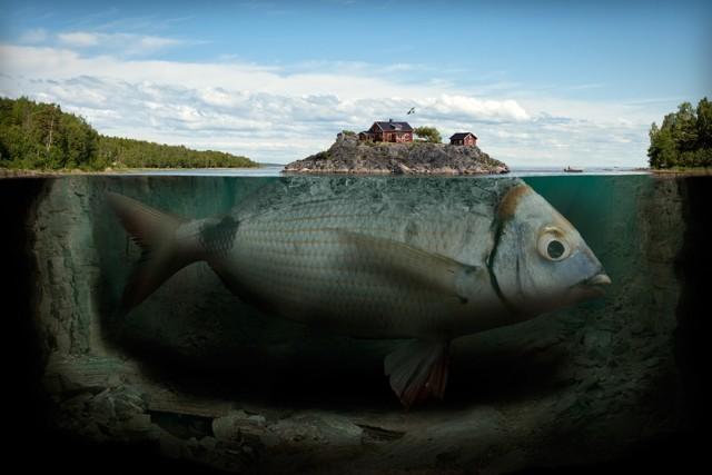 Erik-Johansson-fisk