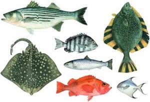 Alcuni disegni dall'edizione illustrata da Charlotte knox di Seafood: a connoisseur's guide and cookbook