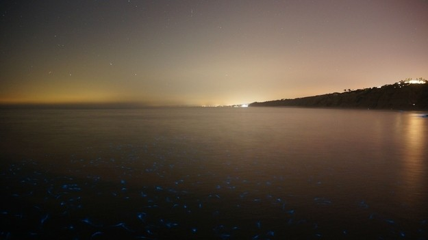 These Glowing Fish Rising To The Surface During The Latest Red Tide In San Diego