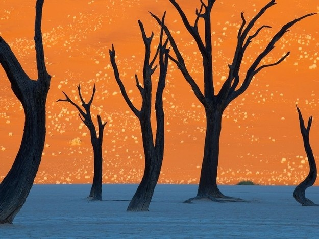 This Breathtaking Photo OF Camel Thorn Trees In Namibia