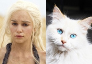 game-of-cat-Daenerys-Targaryen