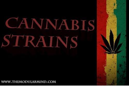 cannabis-strains-app