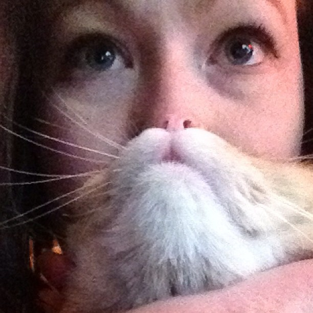 barba-gatto-cat-beard