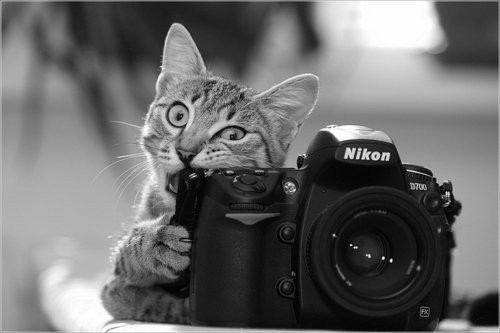 Similarly, the cat who takes flash photography the whole time.