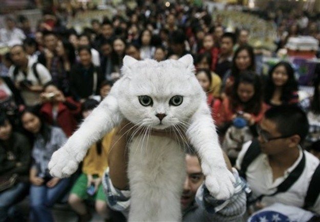 The cat who insists on crowd surfing.