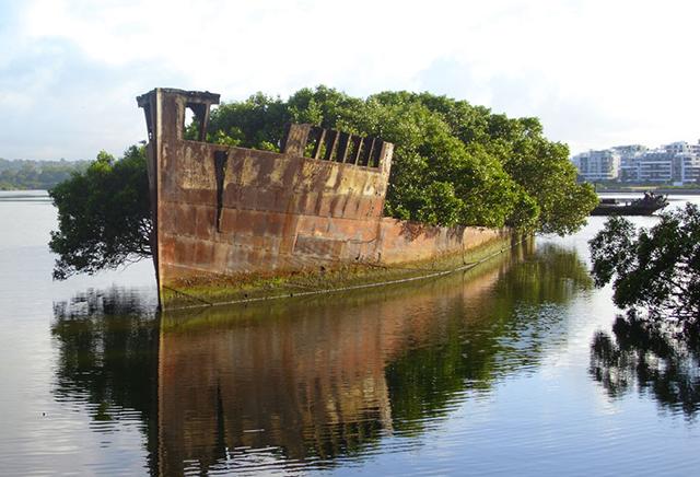 foresta-galleggiante-nave-australia-natura-2