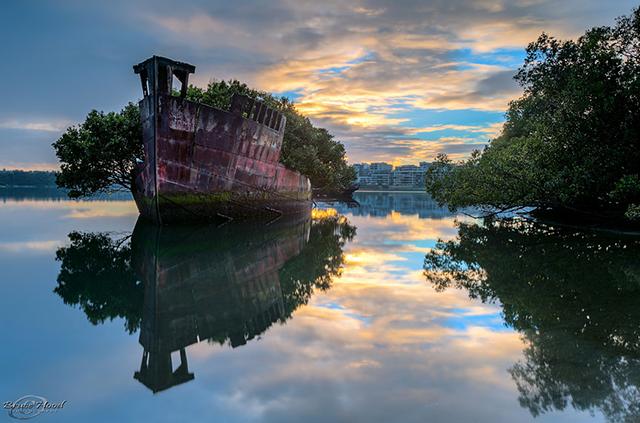 foresta-galleggiante-nave-australia-natura-3