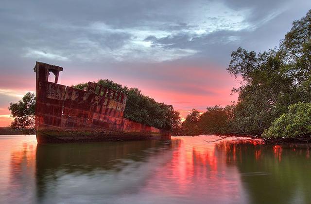 foresta-galleggiante-nave-australia-natura-1