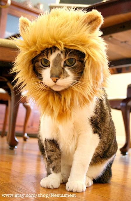 lioncat02