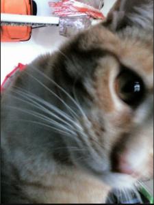 snapcat1