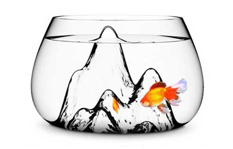 fish-curved-glass-bowl