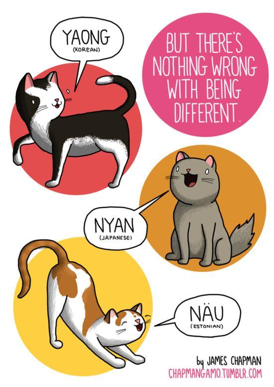 miao-2-gatto