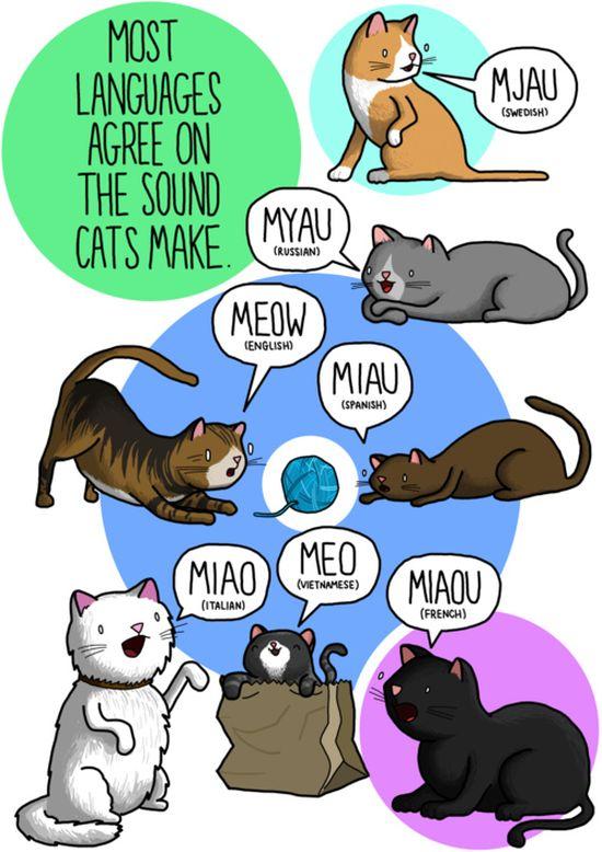 miao-gatto