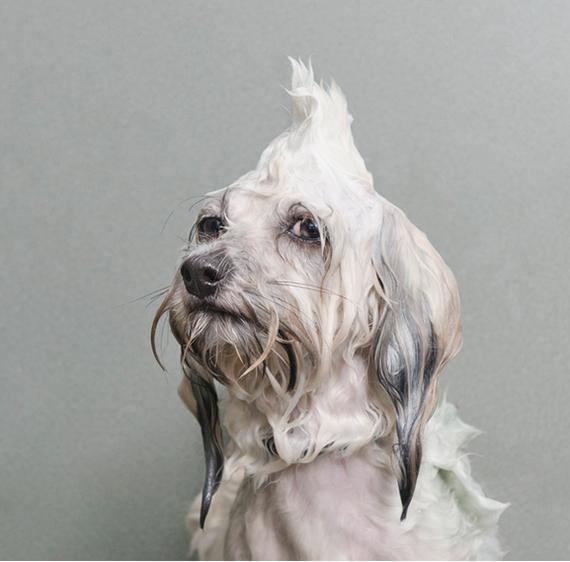 Foto di cani durante il bagno che vi faranno iniziare meglio la