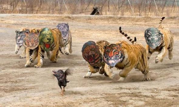 tanti leoni tatuaggio brutto