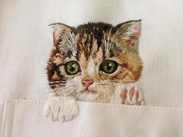 gatti-camicie-2