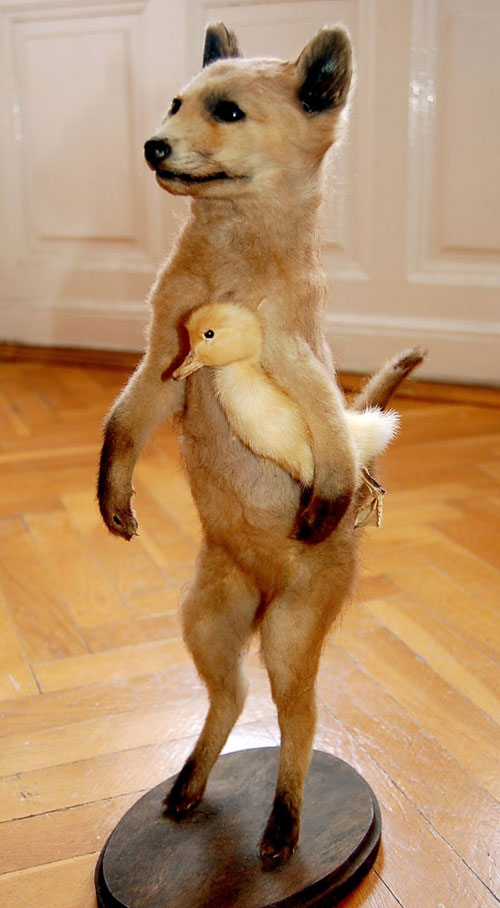 terrific-taxidermy-holding-duck