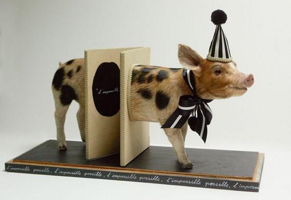 weird-taxidermy-animal-photos03