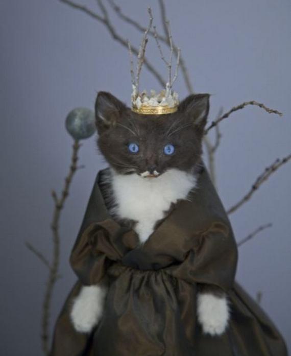 weird-taxidermy-animal-photos05