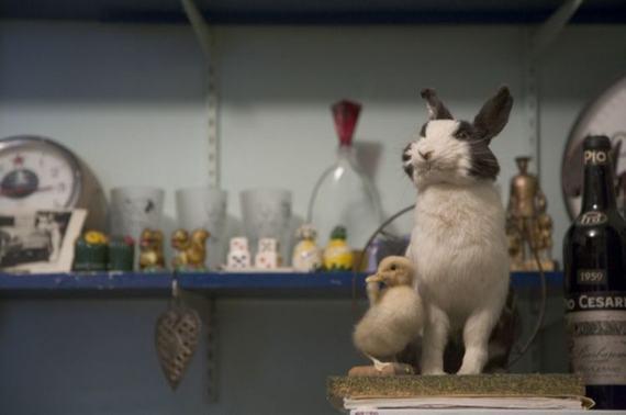 weird-taxidermy-animal-photos09