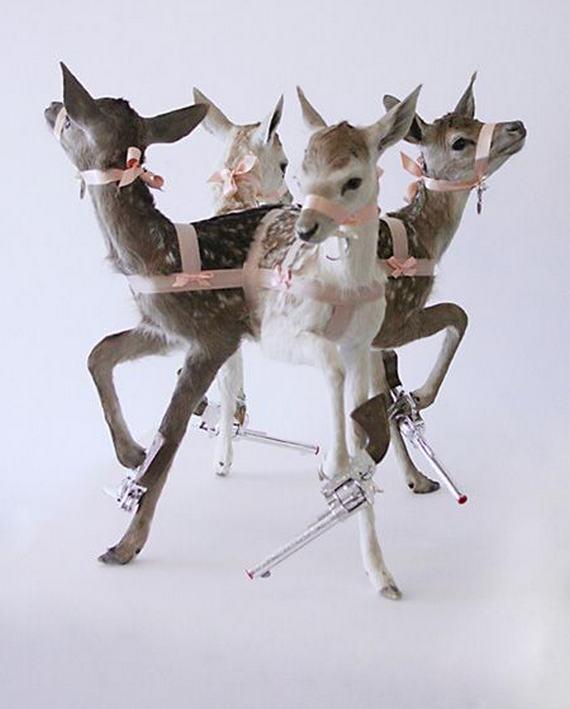 weird-taxidermy-animal-photos14