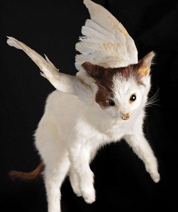 weird-taxidermy-animal-photos19