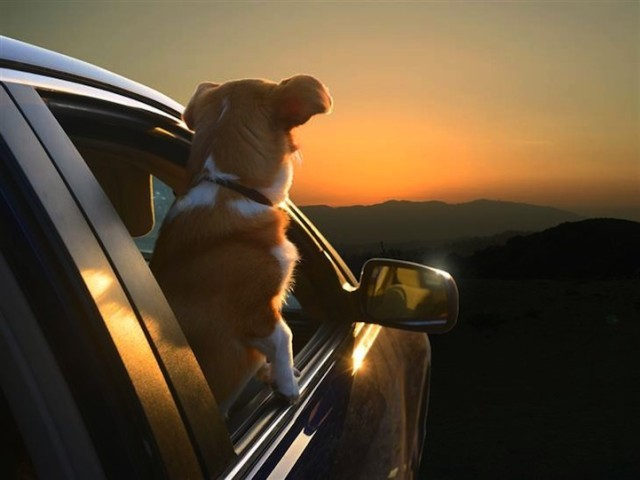 Dogs in Cars Sunset 640x480