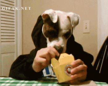 L-affamato-puzzolente