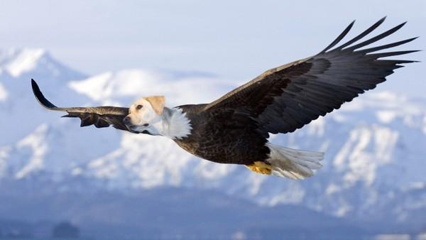bald eagle dird