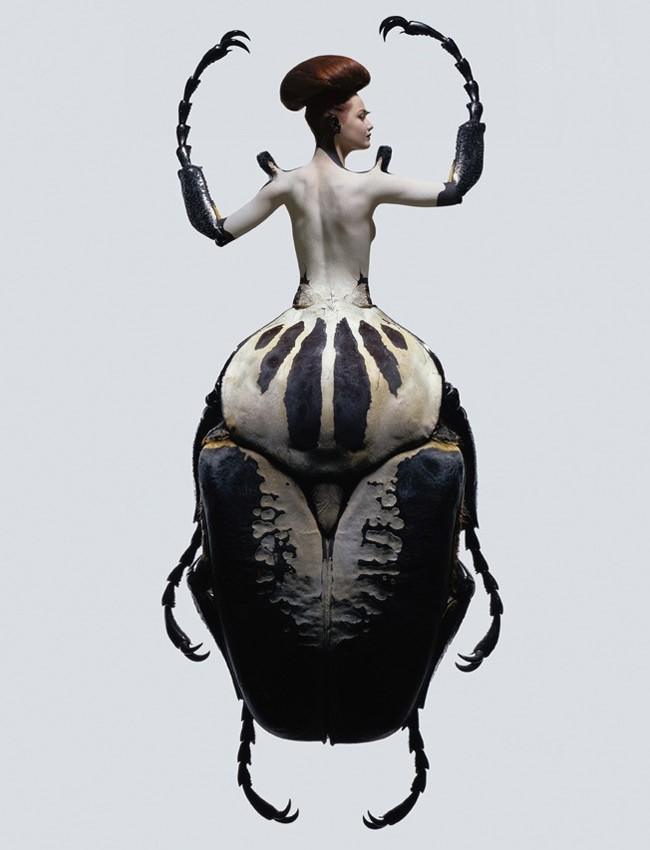 insetto