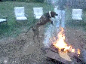 perfect-loop-dog-jump