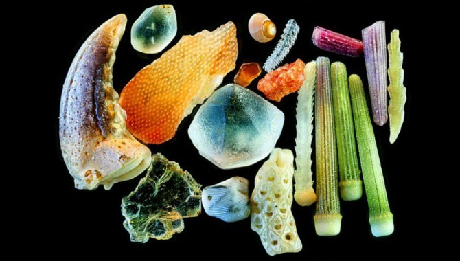 sand grains under microscope gary greenberg 6