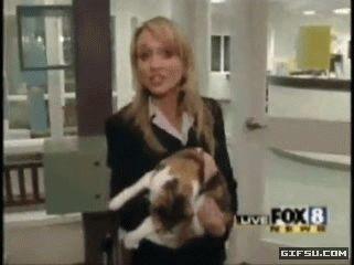9sIm3uc3GIE angry cat attacks reporter gifsu.com