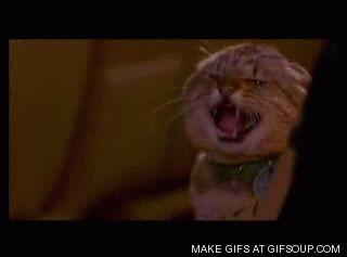 cat attack o