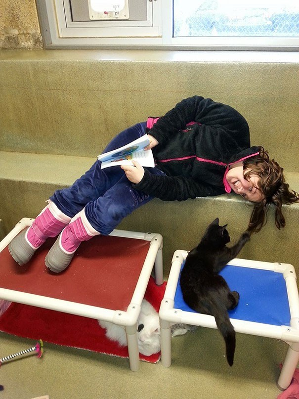 reading children shelter cats book buddies 1