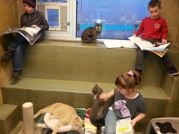 reading children shelter cats book buddies 10