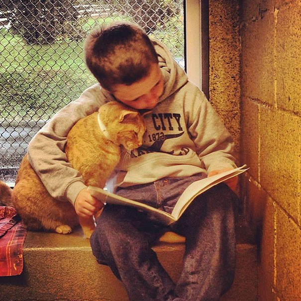 reading children shelter cats book buddies 11