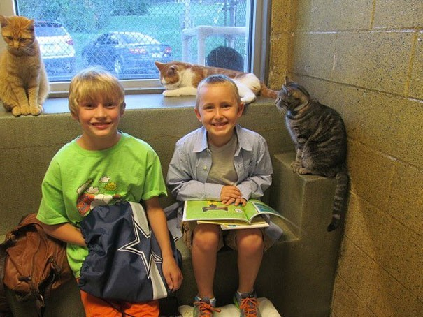 reading children shelter cats book buddies 12