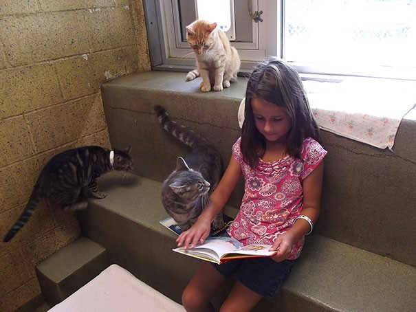 reading children shelter cats book buddies 13
