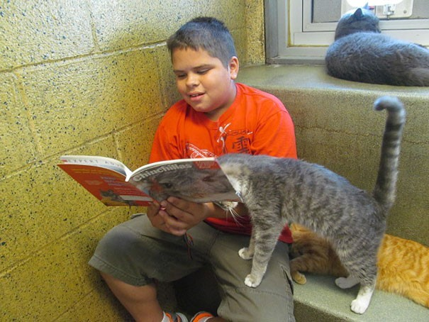 reading children shelter cats book buddies 15
