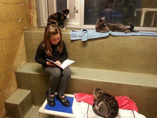 reading children shelter cats book buddies 2