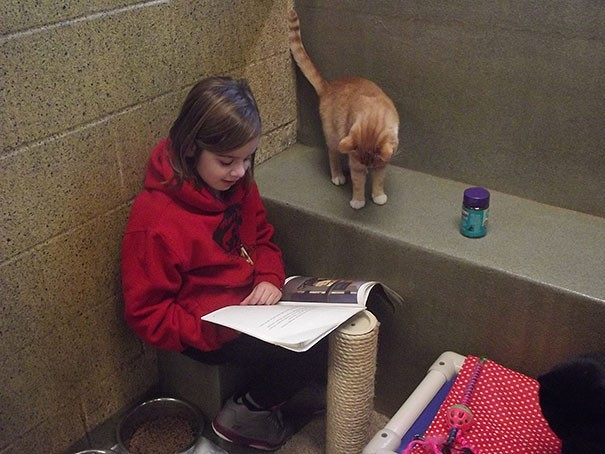 reading children shelter cats book buddies 8