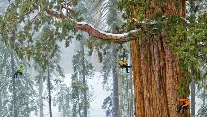 01 sequoia climbing team 670