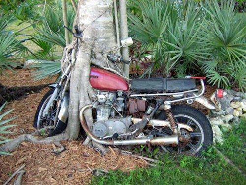 a.aaa Bike in tree