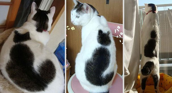 cat markings 4 2