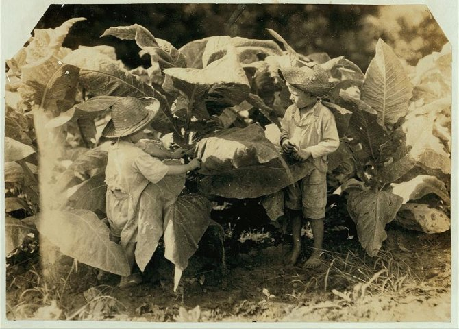 child labor united states lewis hines 20