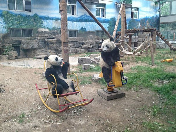 funny bears doing human things 31