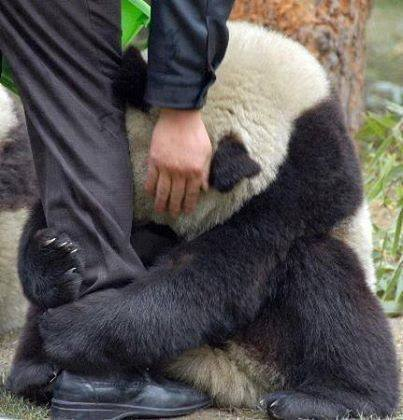 panda-terremoto