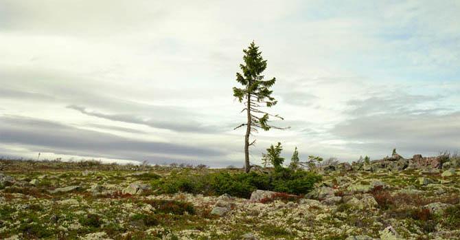 albero-antico