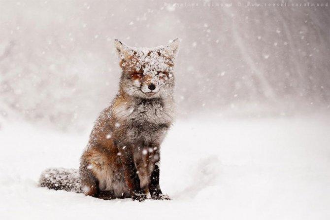 amazing fox photos 1